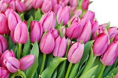Grupo de tulips cor-de-rosa imagens de stock royalty free