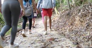 Grupo de turista en la gente de Forest Back Rear View Of que emigra la trayectoria en el bosque que sostiene las mochilas en alza almacen de metraje de vídeo