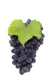 Grupo de uva. Fotos de Stock