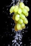 Grupo de uva com água Fotografia de Stock