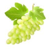 Grupo de uva Criado com as malhas do inclinação Imagens de Stock Royalty Free