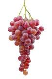 Grupo de uvas ( Imagem de Stock Royalty Free