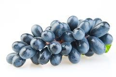 Grupo de uvas azuis Fotografia de Stock
