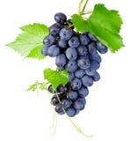 Grupo de uvas fresco com as folhas isoladas no fundo branco Fotografia de Stock
