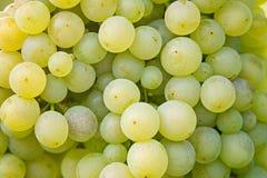 Grupo de uvas, fundo Fotos de Stock