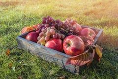 Grupo de uvas maduro bonito e de maçãs vermelhas na grama em uma caixa de madeira O conceito da colheita imagem de stock royalty free