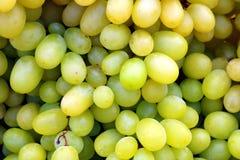 Grupo de uvas verdes maduras imagem de stock