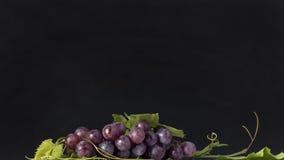 Grupo de uvas vermelhas com folhas e fundo escuro Fotografia de Stock Royalty Free