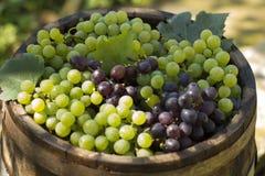 Grupo de uvas vermelhas e brancas Imagem de Stock