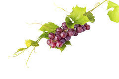 Grupo de uvas vermelhas e de folhas no fundo branco Fotos de Stock Royalty Free