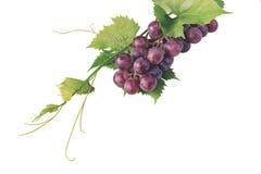 Grupo de uvas vermelhas e de folhas no fundo branco Foto de Stock
