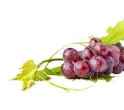 Grupo de uvas vermelhas e de folhas no fundo branco Fotos de Stock