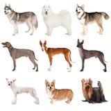 Grupo de vários cães imagens de stock royalty free