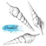 Grupo de vários shell do mar Fotografia de Stock