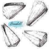 Grupo de vários shell do mar Imagens de Stock Royalty Free