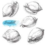 Grupo de vários shell do mar Imagens de Stock