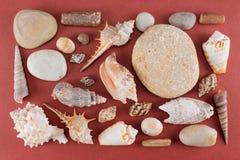 Grupo de vários shell e pedras do mar no fundo vermelho-marrom Fotografia de Stock
