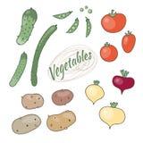 Grupo de vegetais ilustração do vetor