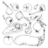 Grupo de vegetais desenhados à mão Foto de Stock