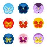 Grupo de vetor da flor do amor perfeito Imagem de Stock