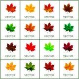 Grupo de vetor, folhas de outono Imagem de Stock Royalty Free