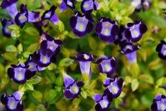 Grupo decorativo da flor fotos de stock royalty free