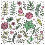 Grupo decorativo do vetor da garatuja botânica colorida fotografia de stock royalty free