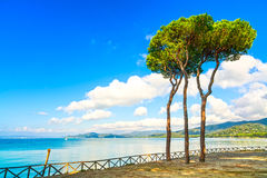 Grupo del árbol de pino en el fondo de la bahía de la playa y del mar. Ala de Punta, Toscana, Italia fotos de archivo libres de regalías