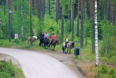 Grupo del caballo Imágenes de archivo libres de regalías