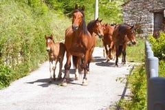Grupo del caballo con el potro Imagen de archivo libre de regalías