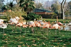 Grupo del pájaro Fotos de archivo libres de regalías