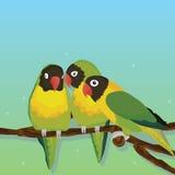 Grupo del pájaro del loro Imagenes de archivo