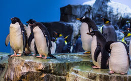 Grupo 2 del pingüino Foto de archivo
