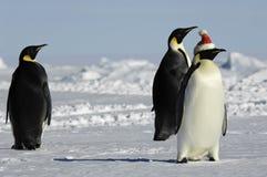 Grupo del pingüino en la Navidad Fotografía de archivo libre de regalías