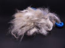 Grupo del primer de pelo de perro caido después de preparar fotos de archivo libres de regalías