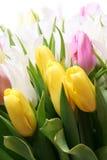 Grupo del tulipán Fotos de archivo