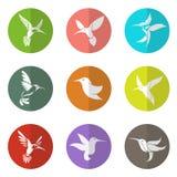 Grupo del vector de colibrí en el círculo Imagenes de archivo