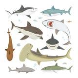Grupo diferente da pose do tubarão do vetor ilustração royalty free