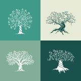 Grupo do ícone da silhueta das oliveiras isolado no fundo verde Imagens de Stock Royalty Free