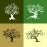 Grupo do ícone das oliveiras Imagem de Stock