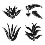 Grupo do ícone de vera do aloés, estilo simples ilustração do vetor