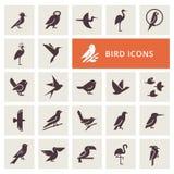 Grupo do ícone dos pássaros ilustração stock