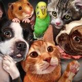 Grupo do animal de estimação Imagens de Stock