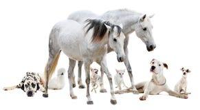 Grupo do animal de estimação branco imagem de stock royalty free