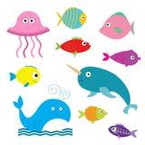 Grupo do animal do mar e do oceano Isolado Peixes, medusa, narval, baleia, peixe do raio X Imagem de Stock