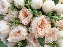 Grupo do arranjo de flores para a decoração Fotos de Stock Royalty Free