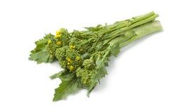 Grupo do broccolini escolhido fresco imagens de stock