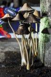 Grupo do cogumelo Imagens de Stock Royalty Free