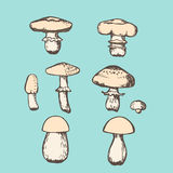 Grupo do cogumelo do vetor ilustração stock