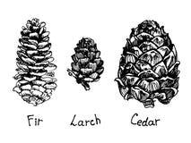 Grupo do cone do pinho Ilustração desenhada mão Imagens de Stock